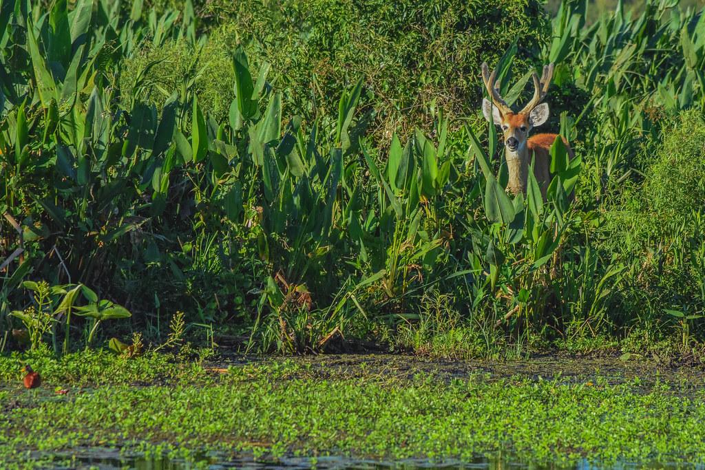 En el reino de los pantanos // Into the swamps kingdom