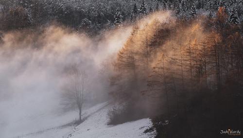 snow cloud mist sunset light gold trees mountains alps switzerland