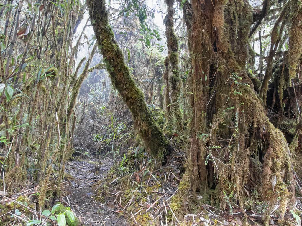La forêt des brumes de Los Quetzales... 50698596548_e790ca6341_b