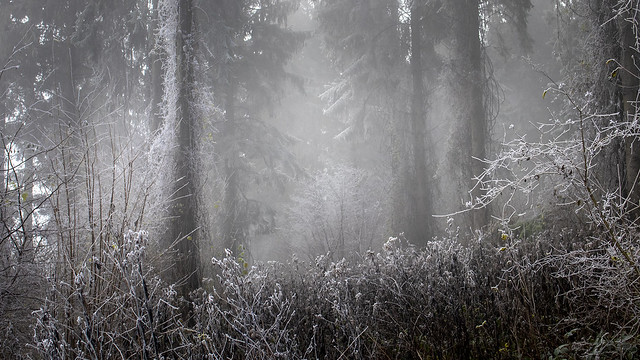 Winter mist frozen in time