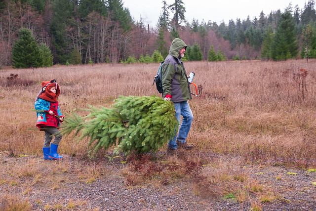 A boy and his father carrying a tree