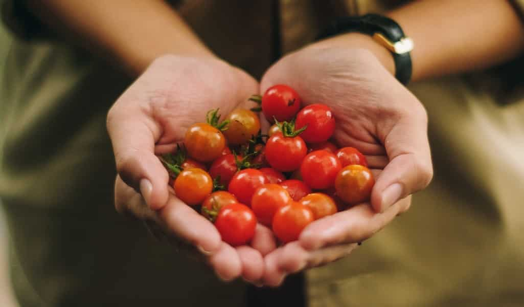 la-tomate-une-source-de-L-DOPA-contre-la-maladie-de-Parkinson