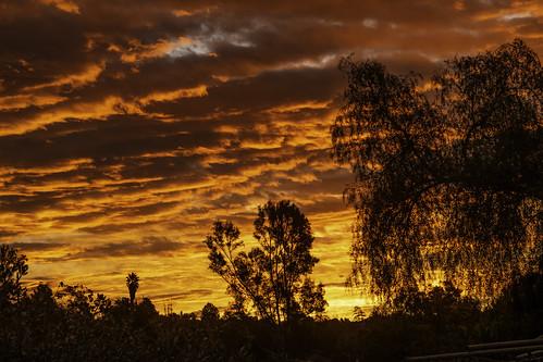 eucalyptushills sunrise color colorful trees silhouettes