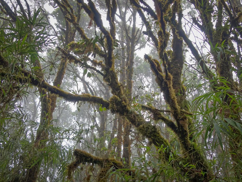 La forêt des brumes de Los Quetzales... 50699342851_6fc0f5a62c_b