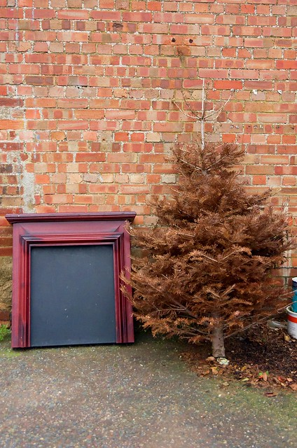 I've got the tree up by the fireplace