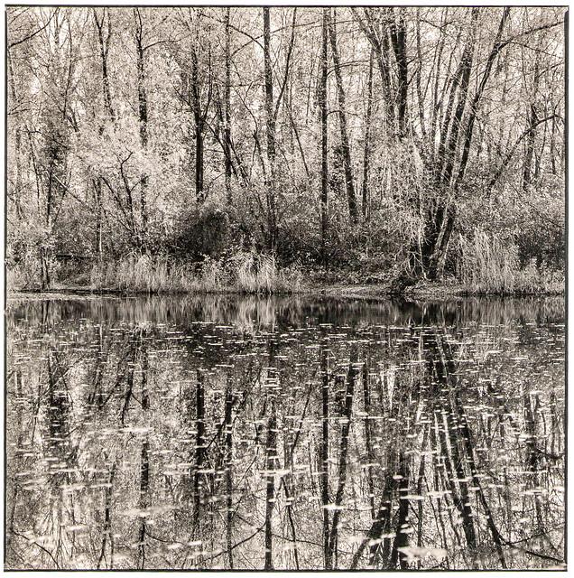 am Waldsee