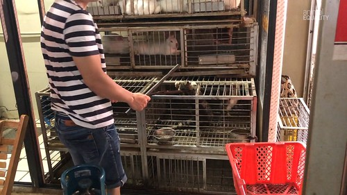 Cat and Dog Meat Trade in China - 2020