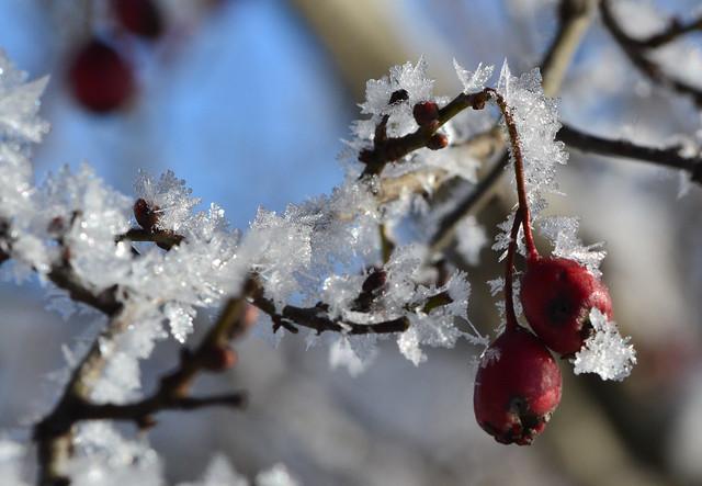 Nature's Christmas Bowls - explored 10-12-2020