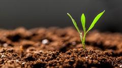 Le piante possono inviare segretamente segnali elettrici sotterranei. Ecco come fanno