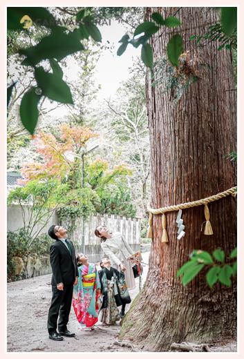 七五三のロケーション撮影 神社のご神木を見上げる家族