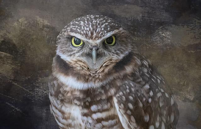 Burrowing Owl_0615_03-14-20_BZ_Texture Blend