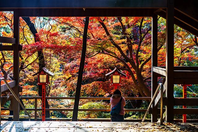 Autumn leaves at Todoroki Fudouson : 紅葉に彩られた明王院(等々力不動尊)