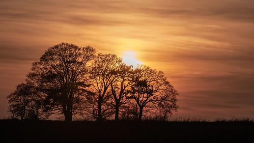 landscape sunset romanroad canon cambridgeshire tree lintonsnapper