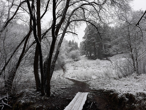 winter forest wood landscape lietuva lithuania
