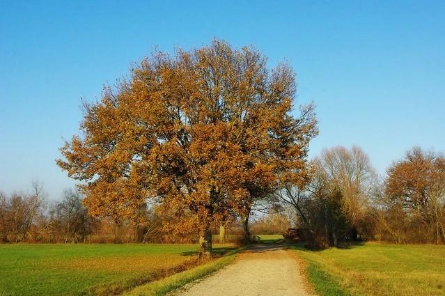 Fin novembre en Alsace