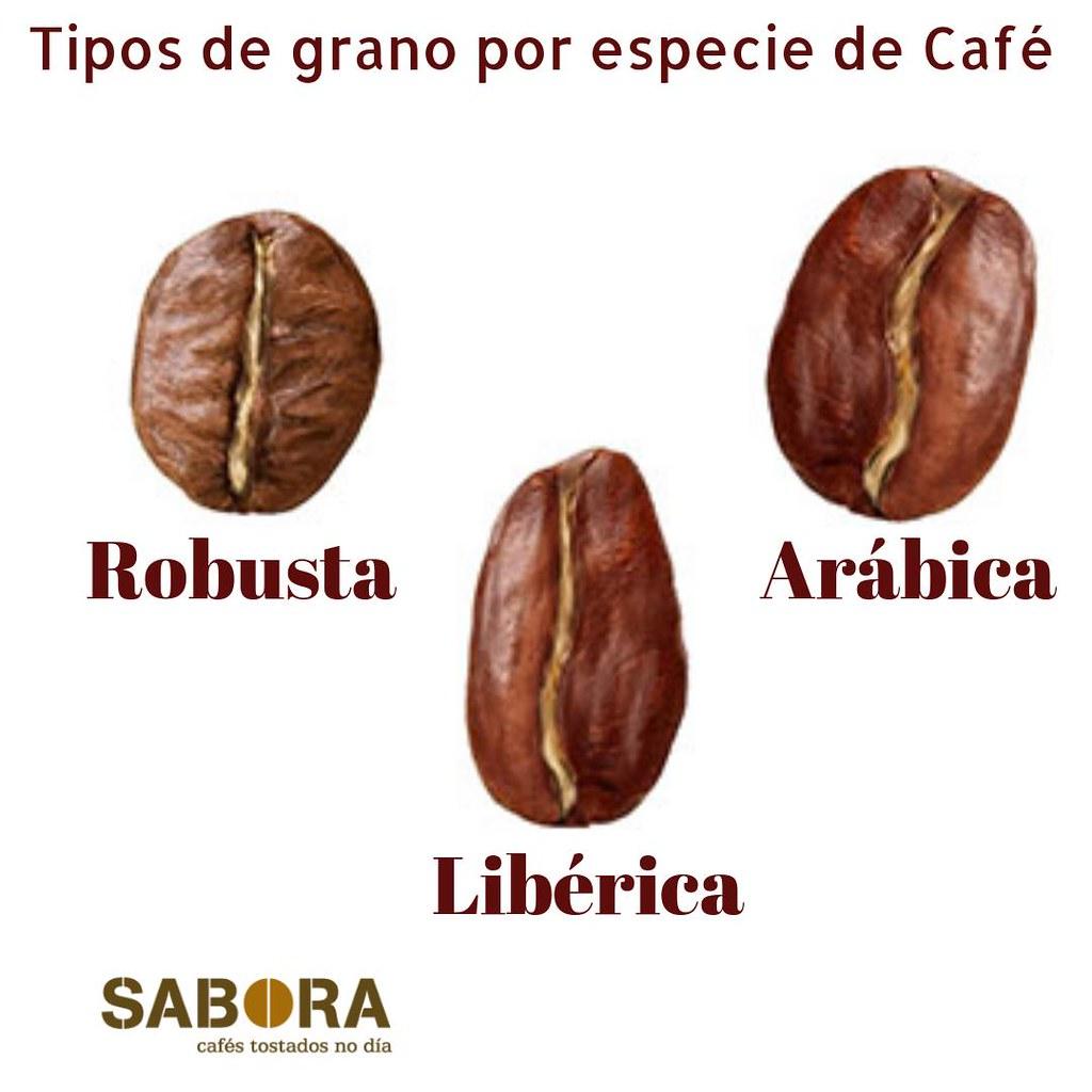 Tipos de grano de café por especie