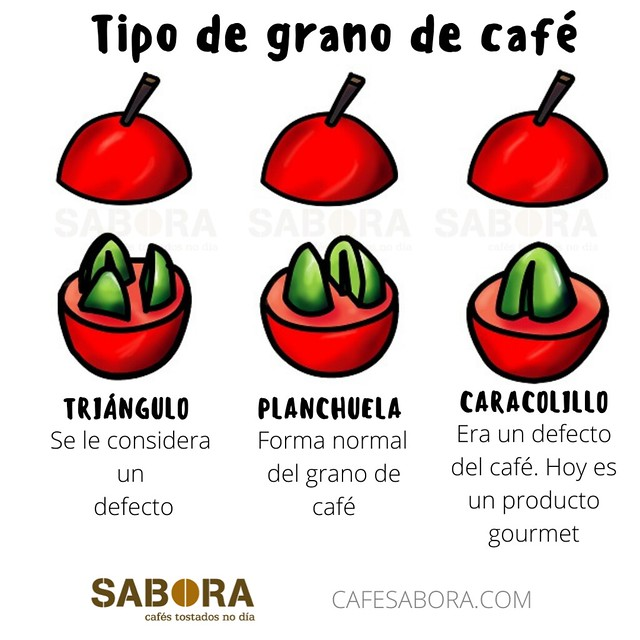 Tipos de granos de café por la forma de aparecer en la cereza