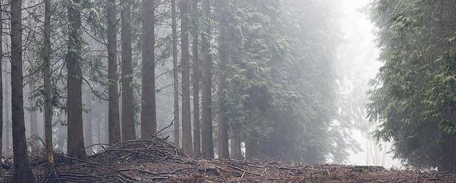 Plantation-trees_6053-Pano-adj copy
