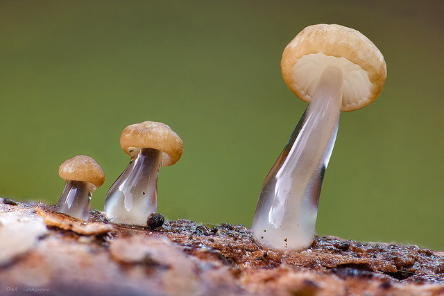 ectoplasma shroomsticks