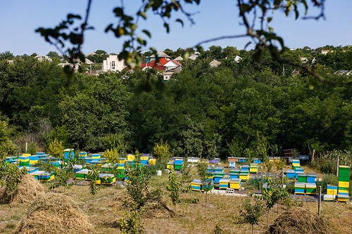 Moldova honey cooperative makes a beeline towards success