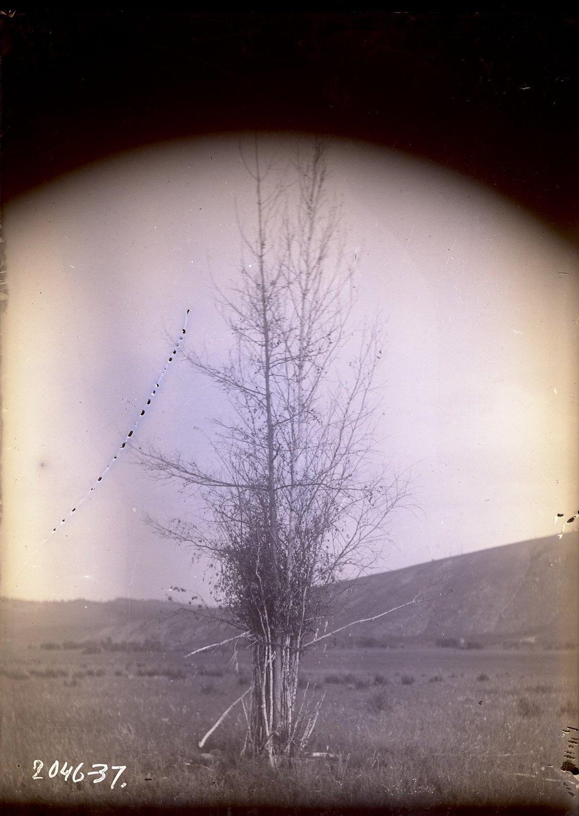 Онгон (материальное вместилище духов умерших предков) в улусе Торгокон