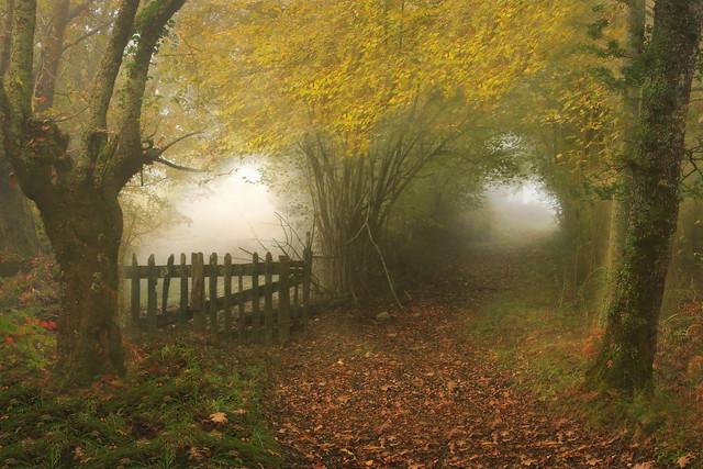 Camino entre árboles ( Explore )