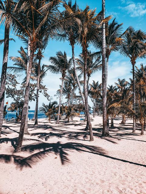 Puerto Plata Palm Trees