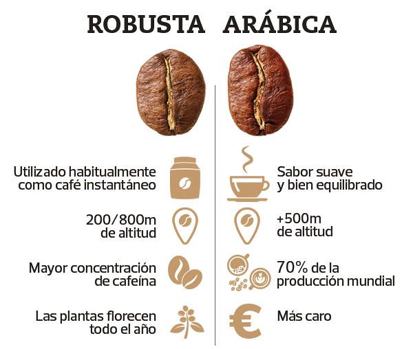 Cafe robusta versus café arábica
