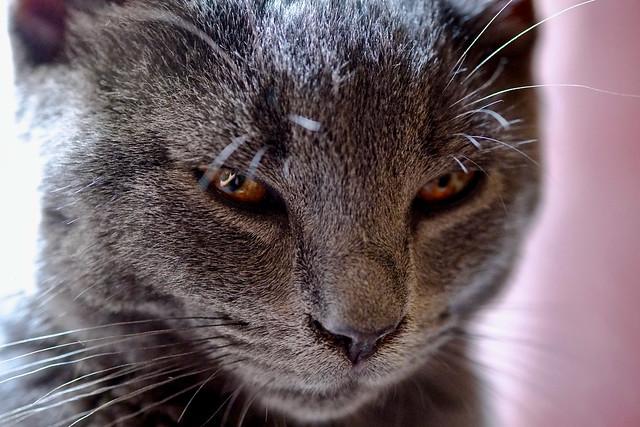 Serious cat - Neko ne rigole pas