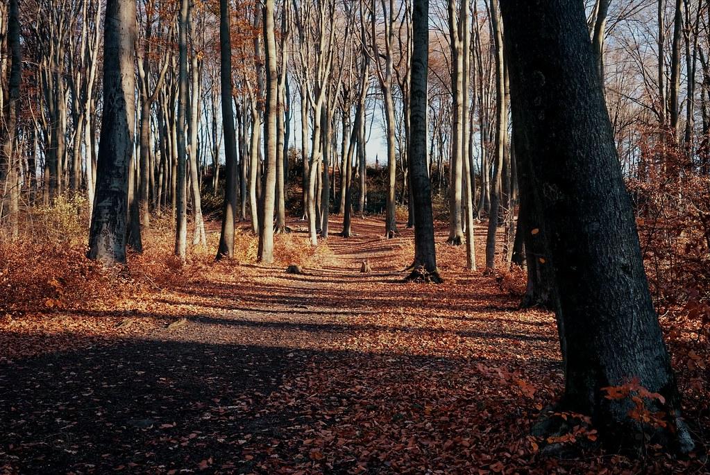 Woods Kerkrade Anstelvallei