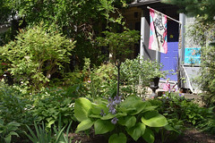 Garden, flag, mauve door