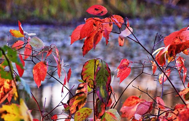 Autumn Awesomeness #48