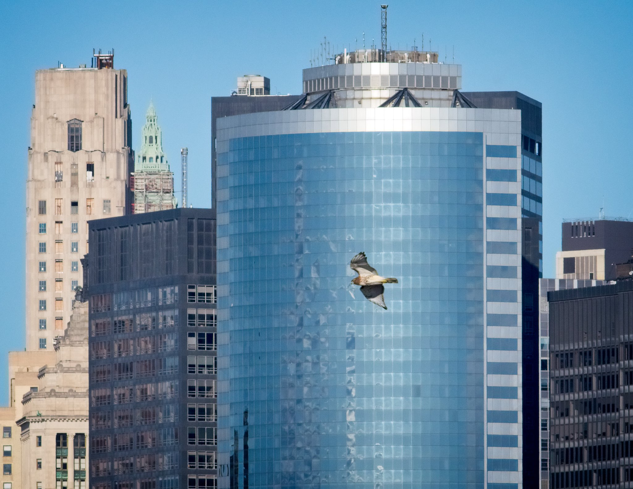 Male GI red-tail flying over lower Manhattan