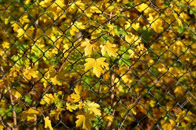 Still Autumn Fence