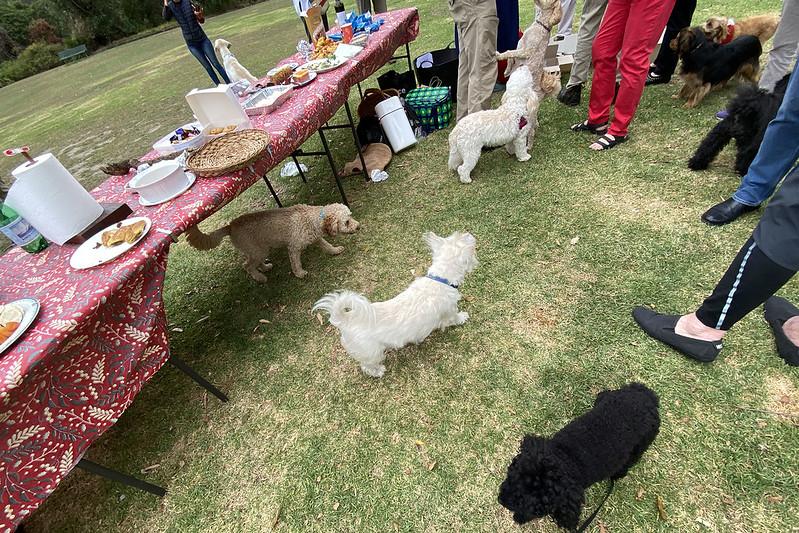 Dog Christmas party