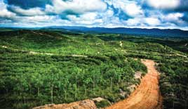 Country Focus: Indonesia's rubber sustainability at a crossroads