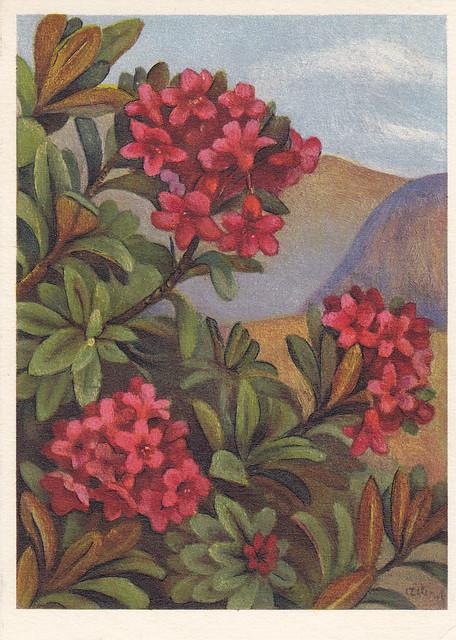 Postkarte / Schweiz