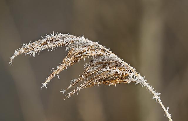 Frost in der Au
