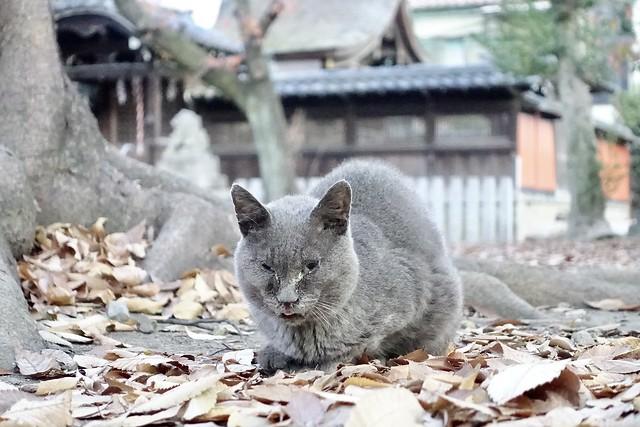 Today's Cat@2020−12−11