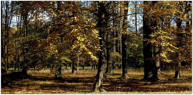 Kolory jesieni  * EXPLORE