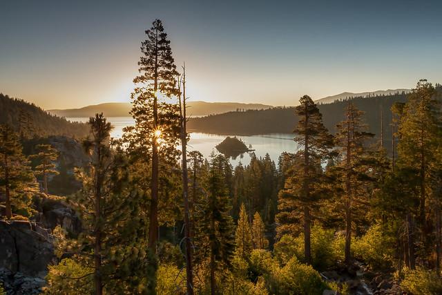 behind the pine