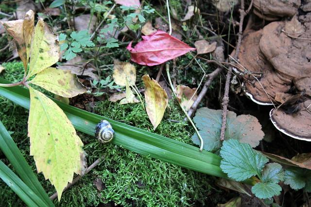 snail in autumn
