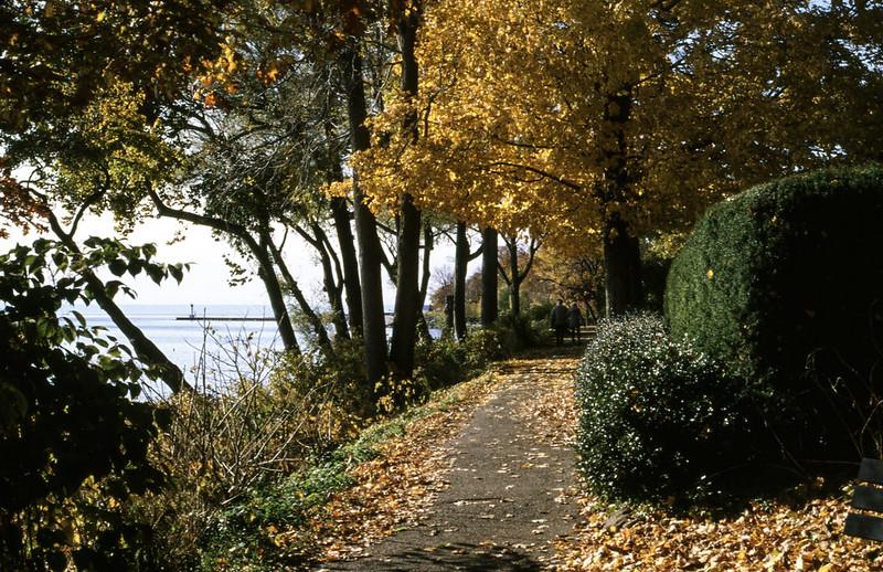 Dingle Park Fall Colours Westward