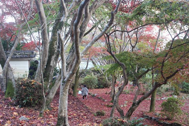 syojiji-gosyuin016