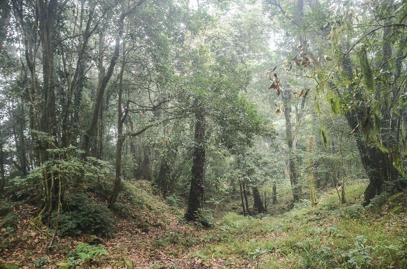 大竹溪山的迷霧森林 (3)