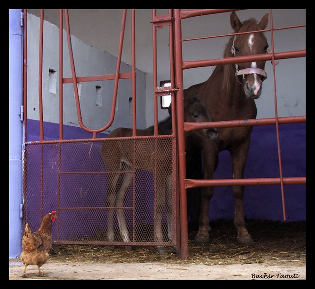 Supervising the stable -3