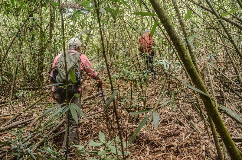 大竹溪山登頂前竹林
