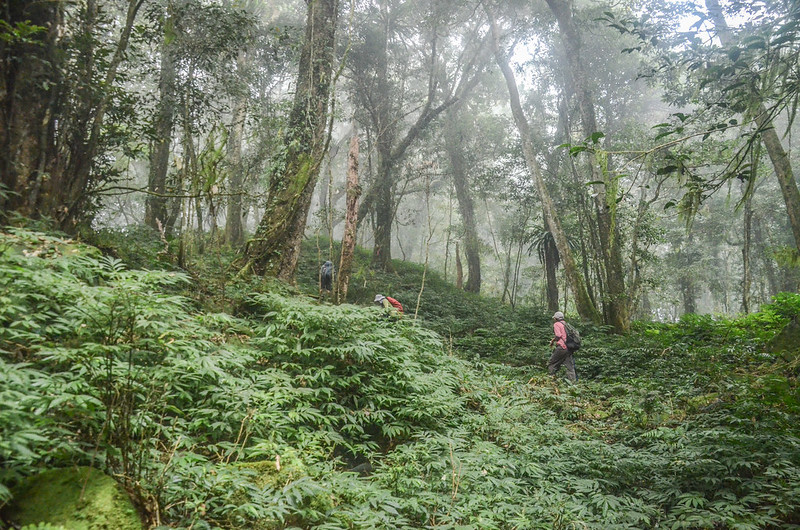 大竹溪山的迷霧森林 (4)