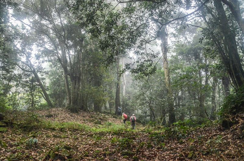 大竹溪山的迷霧森林 (2)