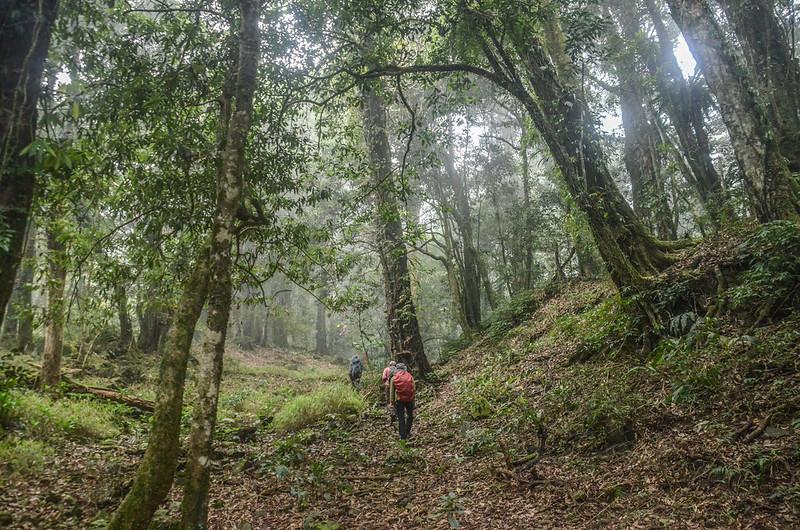 大竹溪山的迷霧森林 (1)